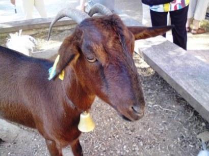 profetul capra