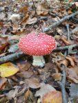 O problemă cu niște ciuperci